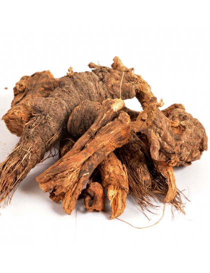 Raiz de Urso - Osha Root